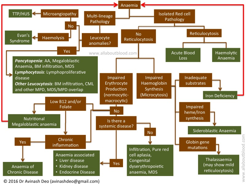 Approach to Anaemia