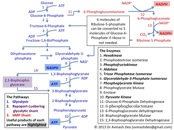 hexose 6 phosphate dehydrogenase h6pd and corticosteroid metabolism