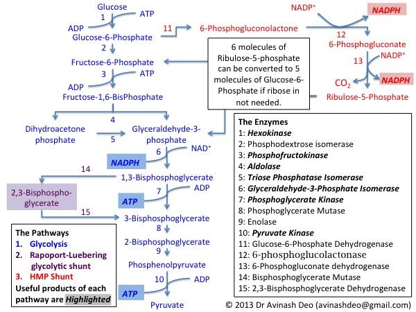 GlucoseMetaboloisRBC