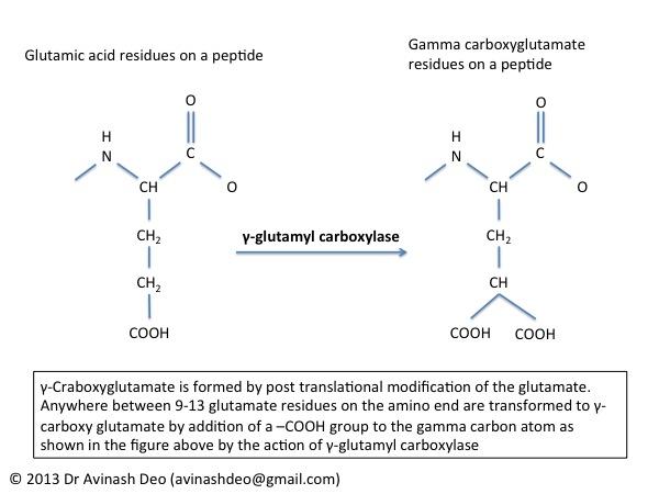 GammaCarboxylGutamate