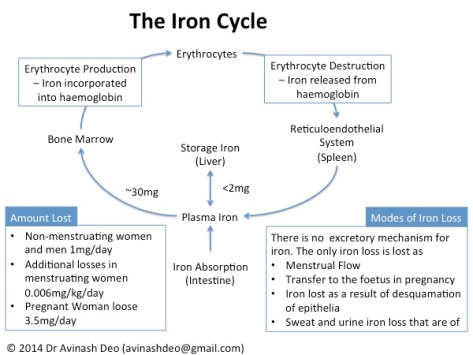 Figure 1. The Iron Cycle