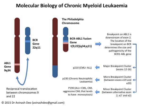Molecular Biology of CML