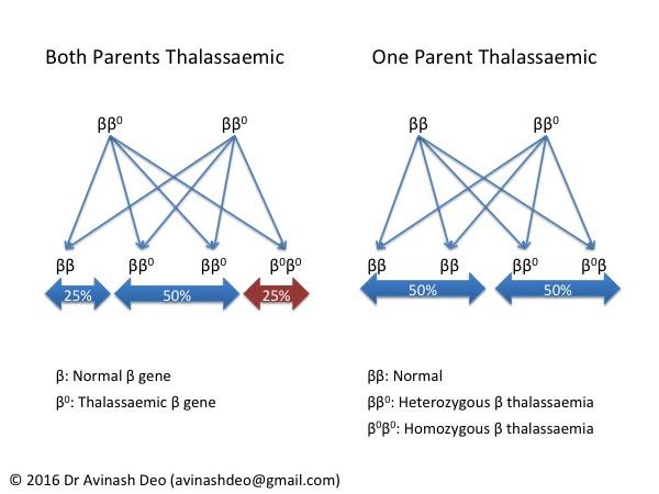 Thalassaemia Inheritance