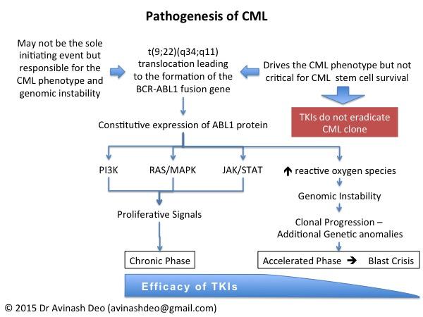 CML Pathogenesis-600px