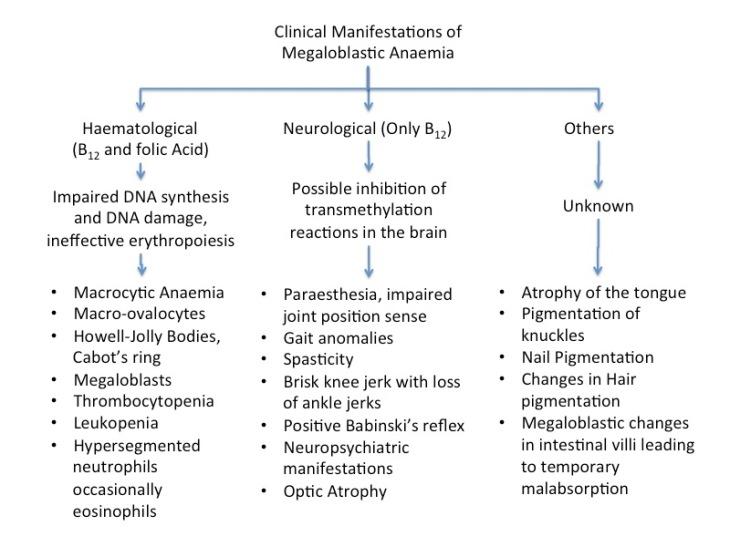 Manifestationf o megaloblastic anaemia